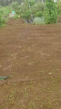 草刈り・草取り After